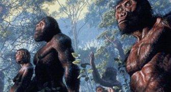 Ağaçlarda yaşayan primatlarken mi yoksa karada yaşayan dik omurgalılar olarak mı daha avantajlıydık? Yazımızda okuyalım.