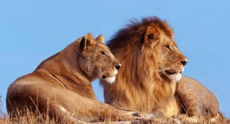 Genel olarak çeşitli hayvanlar hakkında şaşırtıcı özelliklerini paylaştığımız kısa liste